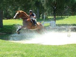 Dehesa Montenmedio - heaven for horses