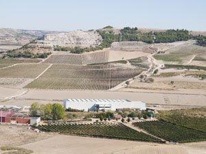 Ribero del Duero winery