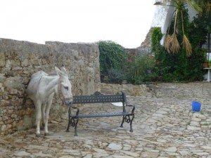 Castellar donkey